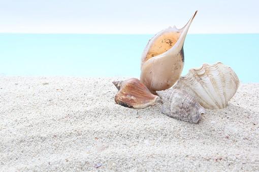 ビーチの貝殻31の写真