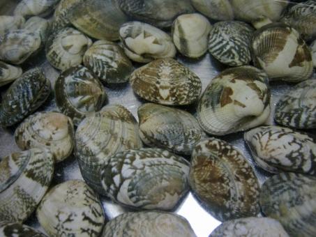 あさり アサリ 貝 砂抜き 下ごしらえ 潮干狩り 海 砂出し ご飯 深川飯 ボンゴレ 魚介 魚介類 魚貝 魚貝類 貝殻