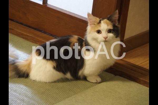 目が合い、固まる猫の写真