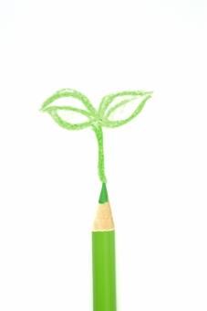 色エンピツ 色鉛筆 エコロジー 社会 生命 命 生まれる 発芽 双葉 若葉 葉 種 春 夏 緑 自然 木 環境 初夏 エコ 葉 成長 イラスト 誕生 未来 コピースペース おもてなし 子供 こども かわいい
