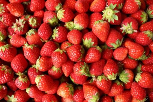 いちご 苺 イチゴ 佐賀ほのか さがほのか 九州 果物 フルーツ fruit 赤 採れたて 自然 植物 実 果実 5月