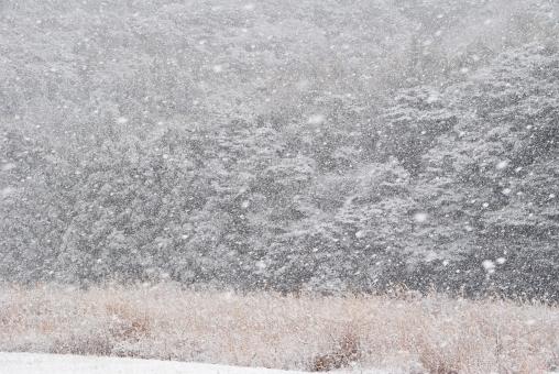 雪 積雪 白い雪 雪どけ 雪解け 雪溶け スノー 吹雪 雪国 雪景色 冬景色 snow 寒冷地 白 白色 真っ白 white 冬 厳冬 山 小さい山 大きい山 季節 枝 小枝 枯れ草 枯葉 植物 ススキ すすき 芒 winter 真冬 自然 森 林 森林 木 tree ツリー フォレスト 降雪 積もる 風景 北国