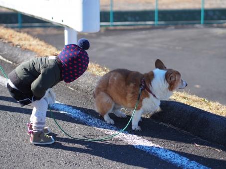 犬 女の子 女児 冬 田舎道 幼児 覗く うーん 屈む dog walk Japanese のどか ほっこり 日本人 Corgi