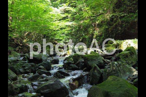 上流の写真