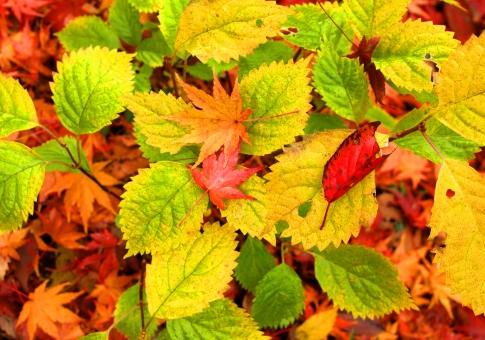 森の落ち葉、カラフルな紅葉、背景素材の写真