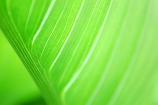 グラデーション 葉脈 茎 薄い 色 色味 自然 植物 風 そよ風 波 空気 流線 木漏れ日 木洩れ日 太陽 日 黄緑 新緑 明るい 山 林 葉っぱ 木の葉 木葉 はっぱ 爽やか 木の枝 小枝 風景 木 樹木 森 グリーン エコ エコロジー 環境 eco eco 森林 森林浴 森林セラピー いやし リラックス リラクゼーション やすらぎ 安らぎ 健康 美容 背景 背景素材 テクスチャ テクスチャー バックグラウンド 5月 6月 7月 8月 9月 10月 夏 緑 春 初夏 癒し きらめき キラメキ 優しさ やさしい 優しい マイナスイオン