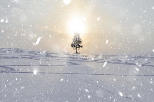 空 雪原 北海道雪 北海道冬 青空 雪景色 白い雲 雪山 空と雪がつながった画像 バッググランド テクスチャ 美瑛冬 夕陽の木 一本松 木 雪画像 雪シーン 極寒 寒い 冬 マイナス気温