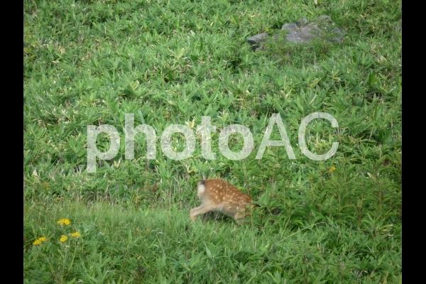 鹿のかくれんぼの写真