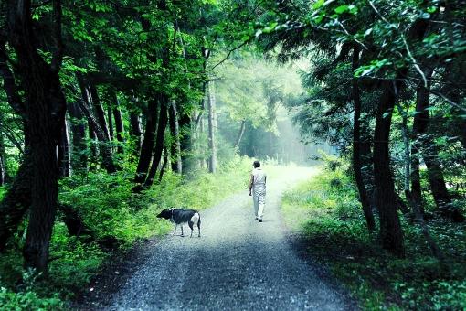 自然 風景 植物 樹木 生き物 犬 人物 男性 散歩 ワンコと散歩 山道 森 林 一本道 飼い犬 家族 新緑 若葉 光溢れる 田舎道 季節感 初夏 夏 暑中見舞い ポストカード 待ち受け画像 コピースペース バックスペース 木漏れ日 木陰 涼し気なイメージ 仲良し 背景 テクスチャー 犬とおじさん 野外アウトドア 爽やかイメージ 日課 のんびり 一人と一匹