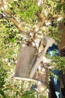 木 植物 樹木 葉 葉っぱ 緑 茶色 ジョウロ 鉄 錆びる 建物 ビル 幹 ぶら下げる ライト ライトアップ 明かり 電気 電球 イルミネーション 光 雑貨 自然 景観 風景
