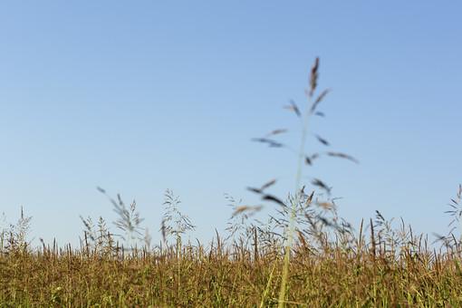 静か 風景 大自然 自然 環境 問題 エコ 活動 リーフ 草 茂る セルビア 緑 グリーン 晴れ 奥行き 喉か 平和 快晴 晴天 植物 一面 平野 大地 余白 素材 グラデーション