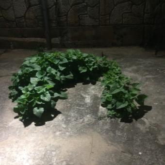 草 植物 コンクリート 力強い 力 根強い 根気