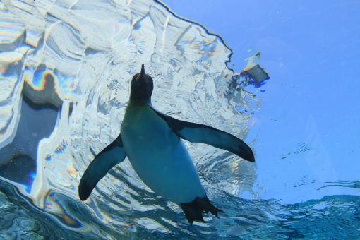 水の中のペンギン
