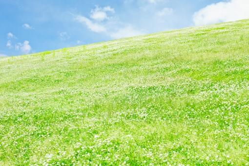 自然 草原 風景 植物 草 空 青空 雲 土手 クローバー クローバー畑 三ツ葉 みつば シロツメクサ 芝 芝生 丘 シンプル さわやか 爽やか 爽快 鮮やか すがすがしい 晴れ 快晴 天気 ナチュラル グリーン 新緑 明るい 原っぱ はらっぱ エコ エコロジー 環境 eco eco 癒し いやし リラックス リラクゼーション やすらぎ 安らぎ 背景 背景素材 テクスチャ テクスチャー バックグラウンド 5月 6月 初夏 坂