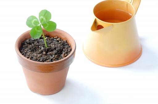 クローバー 四つ葉 四葉 シロツメクサ 幸運 幸せ 幸福 喜び 祝福 お祝い 祝い 草 緑 エコ エコロジー 鉢植え かわいい 植物 グリーン ラッキー 環境 環境問題 白バック コピースペース テキストスペース 新芽 ジョウロ 如雨露 じょうろ