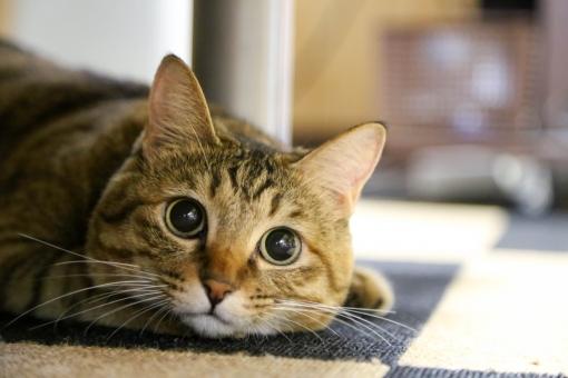 パパと遊ぶ、好奇心いっぱいの可愛い猫
