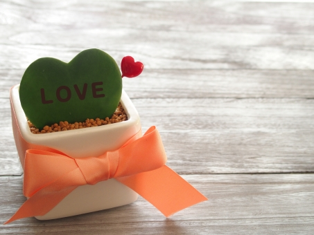 ハート ハート型 サボテン さぼてん リボン 観葉植物 植物 LOVE バレンタイン 愛情 グリーン オレンジ 木目 雑貨 2月 プレゼント