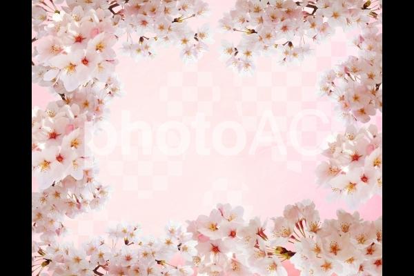 市松模様和紙背景と桜のフレーム素材の写真