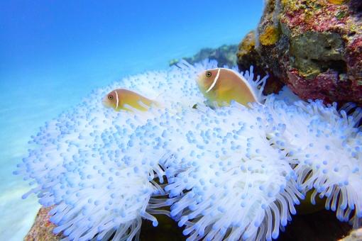 沖縄の海⑨の写真