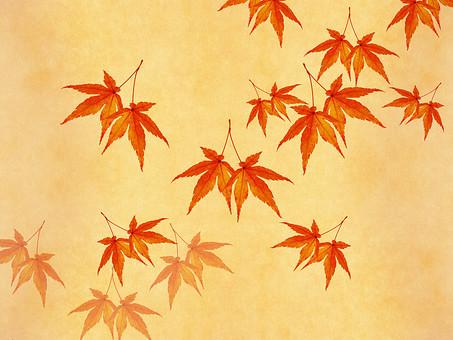 モミジ もみじ 紅葉 椛 かえで カエデ 楓 葉 植物 自然 秋 余白 背景 背景素材 バックグラウンド テキストスペース コピースペース 暖色 空間 質感 テクスチャ ベージュ 赤色 赤 季節 散らばる 散る 散布 加工 写真加工