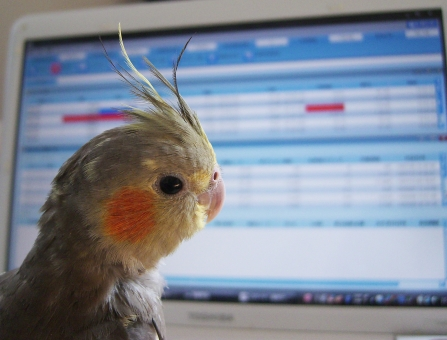 FX 為替 トレード オカメインコ 鳥 眺める レート パソコン 日経 ダウ 株価 トレンド スイング スキャル 金