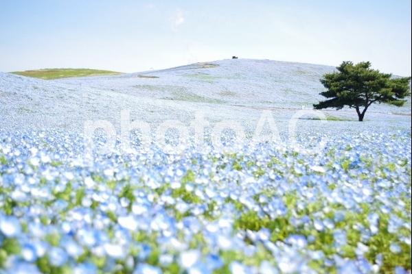 綺麗なお花畑の写真