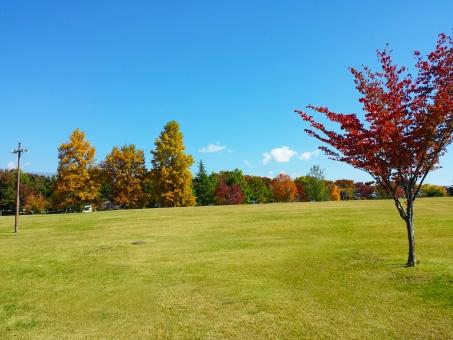 紅葉 秋 もみじ モミジ 空 公園 葉 あき はっぱ こうよう autumn やま 青空 秋晴れ バックグランド もみじがり 綺麗 きれい 山 風景 紅葉狩り 山頂 快晴 落ち葉 色 森 林 植物 季節 背景 もみじ狩 コピースペース 行楽シーズン 木 枯葉 モミジ狩り 景色 キレイ 晴れ 信州 長野 青 緑 黄 赤 あか オレンジ 清々しい すがすがしい ハイキング 風 太陽 日光 紫外線 空気 バックグラウンド 自然 ナチュラル ハガキ マイナスイオン 絵はがき 10月 11月 雲 日差し uvカット 白 紫外線対策 あお 遠足 和風 くも ピクニック 素材 テクスチャ 9月 気分がよい 明るい 日本 晴 天気 散歩 コメントスペース ポストカード 絵ハガキ 芝生 ポスター コピー スペース コメント さんぽ バック