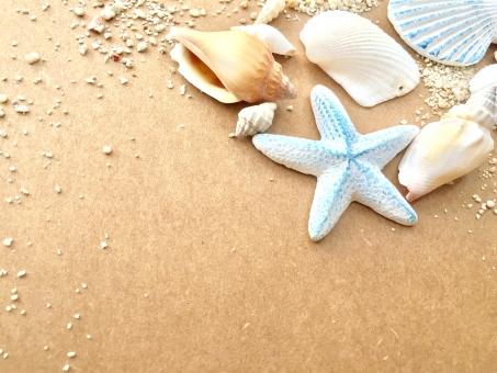 貝殻の背景の写真