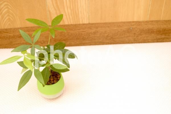 床においた観葉植物の写真