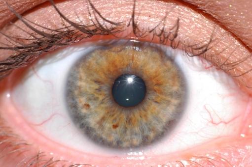 「眼 イメージ フリー素材」の画像検索結果