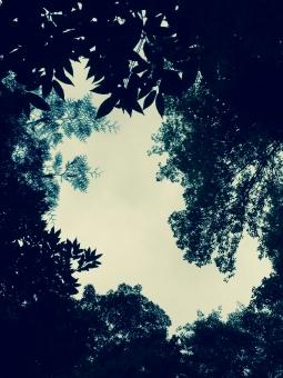森 公園 孤独 自然 風景 レトロ くもり 不安 林 木 植物 暗い 閑散 静か 天気 見上げる モノクロ 白黒 茂る 怪しい モノトーン