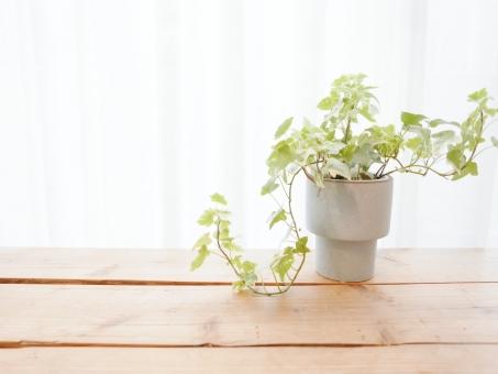 観葉植物の写真素材|写真素材なら「写真AC」無料(フリー)ダウンロードOK