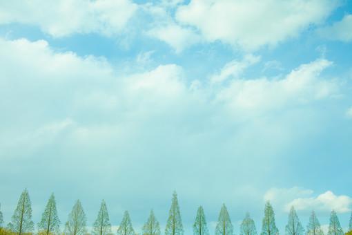 自然 植物 空 雲 青い 白い 青空 晴天 天気 晴れ グラデーション コントラスト 鮮やか 高い 広い 爽やか 木 樹木 葉 葉っぱ 緑 並ぶ 森 林 森林 多い 沢山 集まる 密集 成長 育つ 伸びる 風景 景色 屋外 室外 無人 幻想的