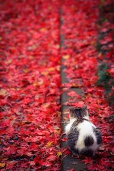 紅葉とネコの写真