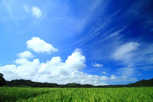 夏の風景3の写真