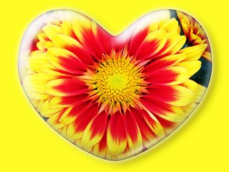 ハート はーと heart 素材 背景 アイコン ラブ love 愛 ロマンチック バレンタイン フレーム クリスタル風 枠 はな 花 華 キク 菊 きく 赤 白 白バック 黄
