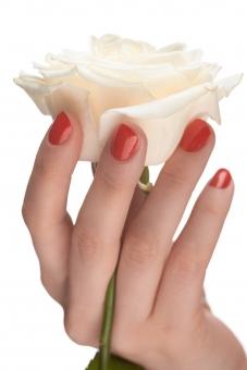 バラ 白バラ 花 フラワー 植物 花びら 花弁 茎 白 ホワイト 女性 おんな 女 ウーマン レディ 肌 素肌 マニキュア 爪 ネイル 赤 手 右手 手指 指先 ハンド 持つ つかむ 触る 触れる はさむ 摘む 一輪 ハンドポーズ ポーズ ハンドパーツ パーツ 白バック 白背景