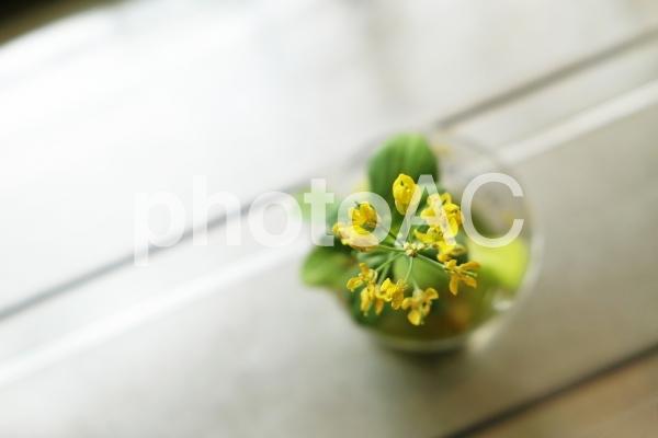 チンゲンサイの花の写真