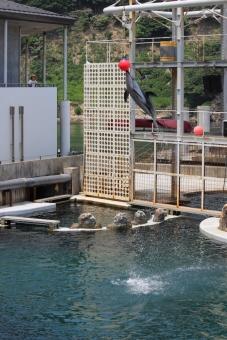 イルカ、ジャンプ!の写真