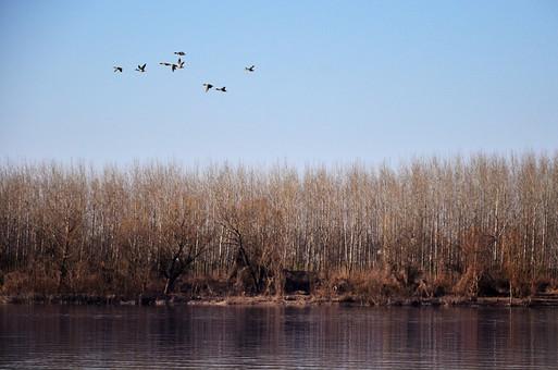 セルビア共和国 セルビア 南東ヨーロッパ バルカン半島 内陸 共和制国家 旧ユーゴスラビア セルビア・モンテネグロ 外国 外国風景 海外 海外風景 景色 風景 自然 美しい 美しい自然 植物 川 河 河川 岸 川岸 河岸 季節 秋 冬 鳥 とり