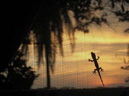 夕日とヤモリの写真