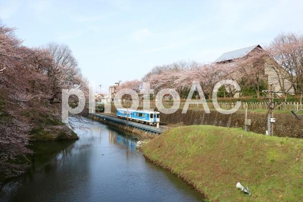 山形 霞城公園の桜の写真