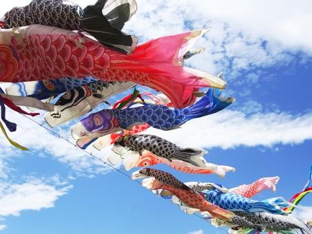 こいのぼり 鯉のぼり コイノボリ 五月 5月 五日 5日 端午の節句 子供の日 こどもの日 子どもの日 男の子 女の子 子ども 子供 まごい ひごい こごい 真鯉 緋鯉 子鯉 こい 鯉 コイ 泳ぐ 天 空 おもしろい 楽しい 行事