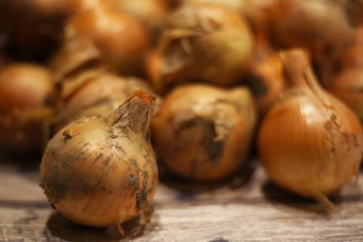 玉ねぎ たまねぎ タマネギ 野菜 材料 食材 料理 土付き 土 食べ物 玉葱 収穫 農業 玉ネギ 畑 植物 新鮮 自然 食事 食品 素材 フード 食物 食べる 農作物 作物