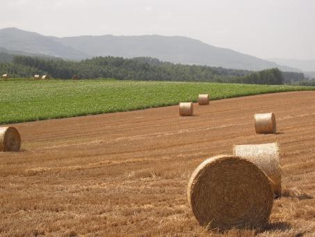 北海道 牧草ロール 草原 丘 畑 大草原 北の大地 草原 緑 山 コロコロ 畑