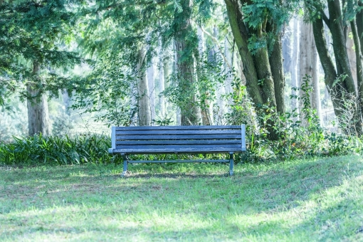 新緑の公園23の写真