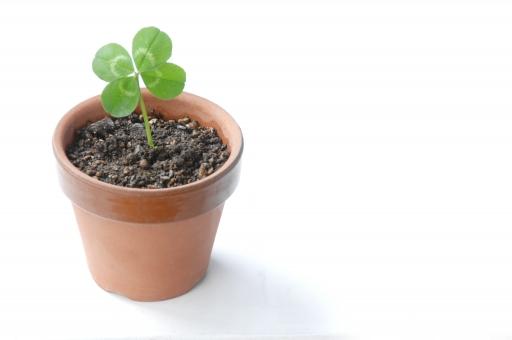 クローバー 四つ葉 四葉 シロツメクサ 幸運 幸せ 幸福 喜び 祝福 お祝い 祝い 草 緑 エコ エコロジー 鉢 鉢植え かわいい 新芽 植物 グリーン ラッキー 環境 環境問題 白バック コピースペース テキストスペース