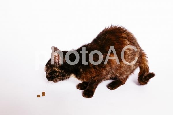 こげ茶の猫の写真