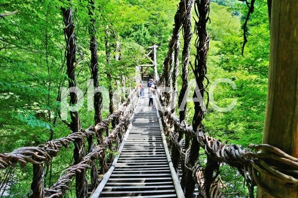新緑の奥祖谷かずら橋の写真
