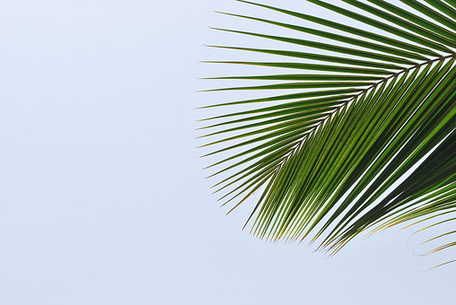 パキスタン 外国 熱帯 南国 南アジア 葉 葉っぱ 緑 自然 植物 空 グレー 灰色 ねずみ色 曇り アップ 右寄り 鋭い まっすぐ 直線 アート 芸術 風景 景色 無人 室外 屋外